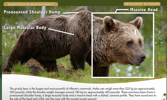 general-category-img-bear